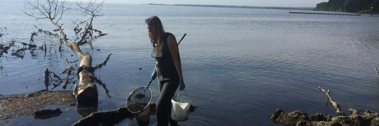 Collecting of beach wrack